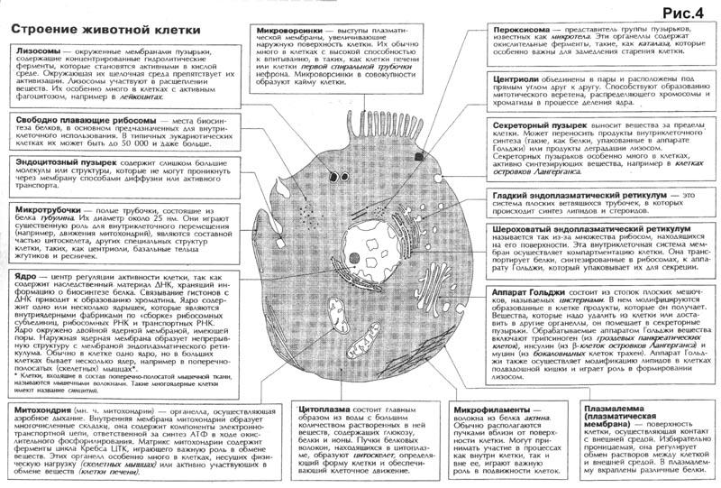 Органоиды клетки. Строение