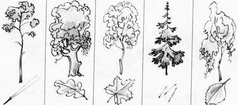 Появляется само дерево которое как