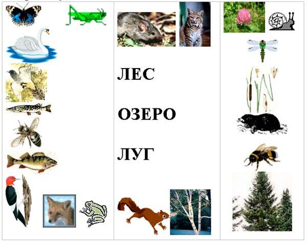 Распределите животных и