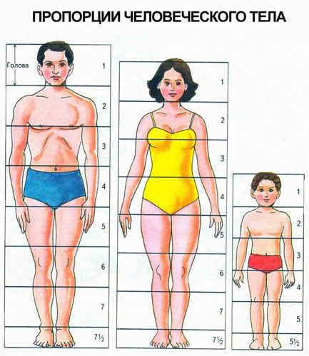 для маштабизирования пропорции фигуры человека в рисунке ходе деятельности