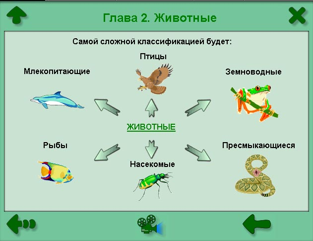 схема классификация животного