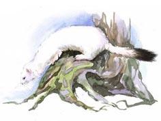 Расскажите о жизни животных в тундре