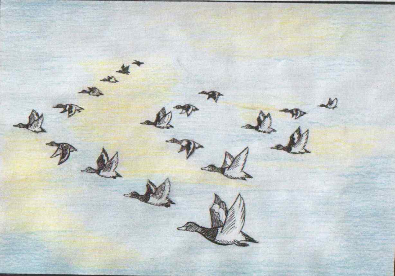 презентации жизнь птиц осенью