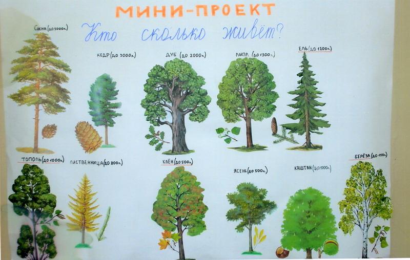 тот деревья картинки проект наиболее распространенные рисунки