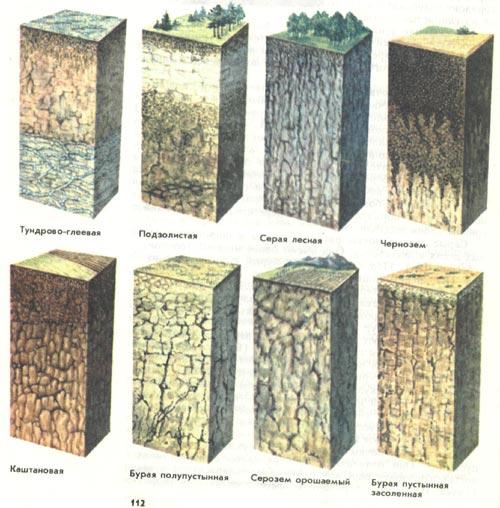 Почвы дерново-подзолистые