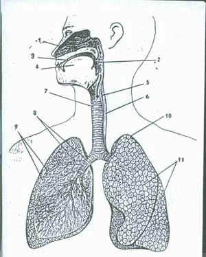 Санатории органы дыхания