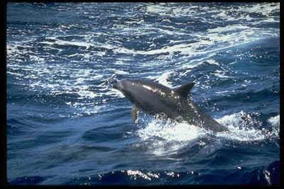 Красивые фото животных (Дельфины)