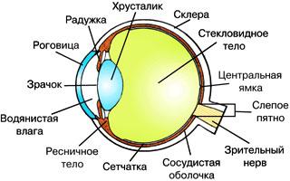 свой цитатник или сообщество!  Кристалл Земли мне представился глазом человека.  Только зрачков много.