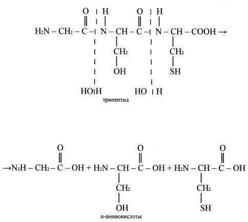 """схема """"Превращение белков"""