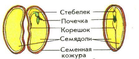 Виды корней и типы корневых систем