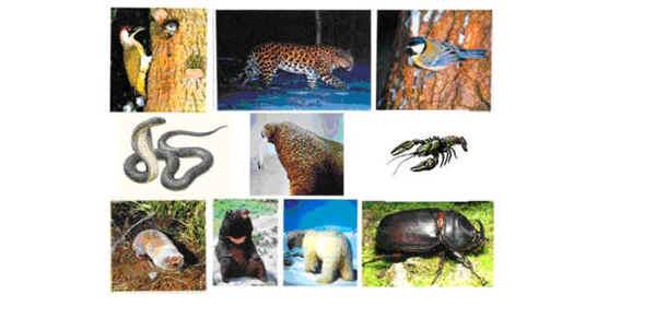 жизней живых организмов.