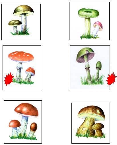 Грибырецепт грибы мицелия как лечить