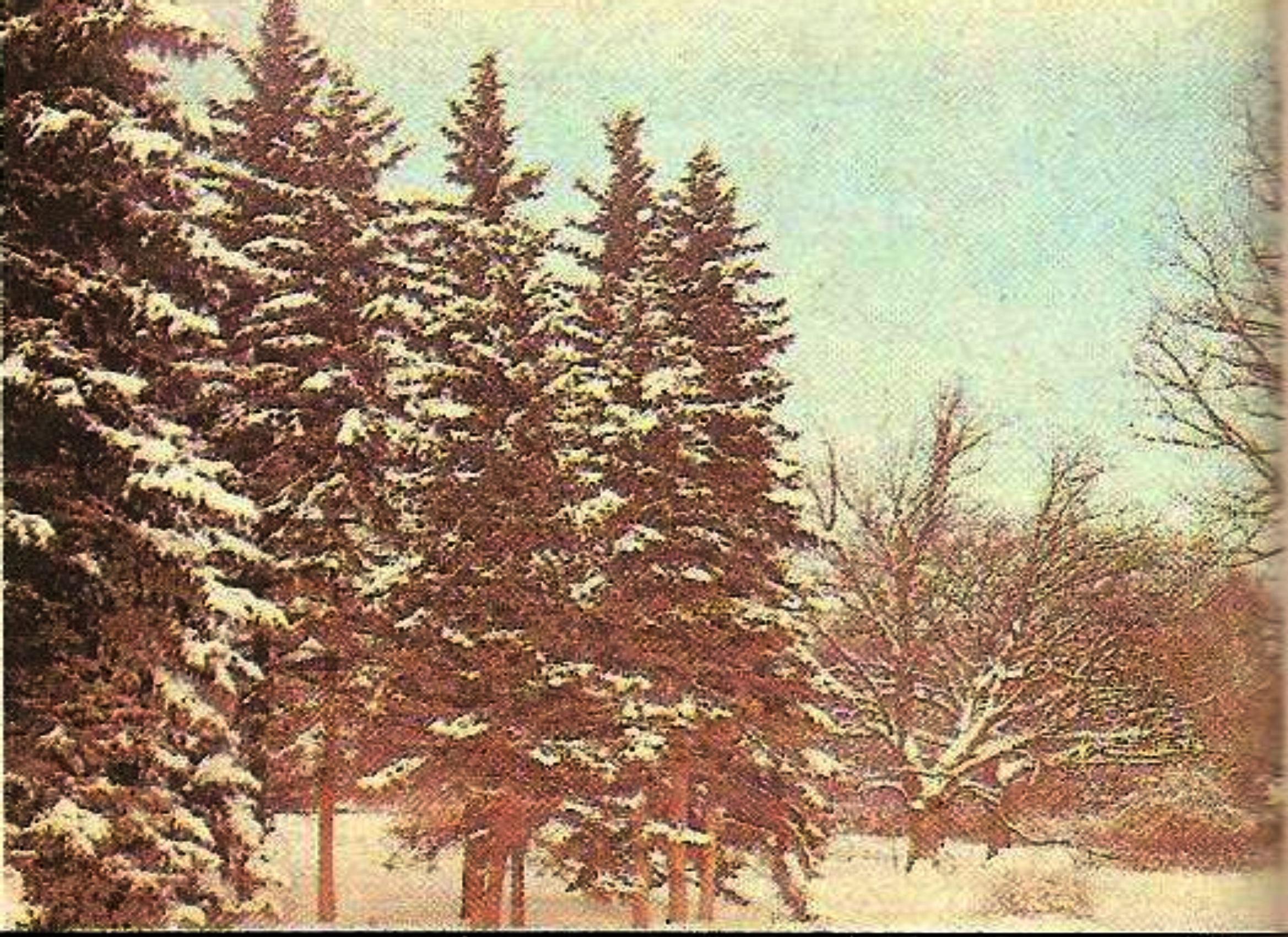 А хвойные деревья ярковыделяются на