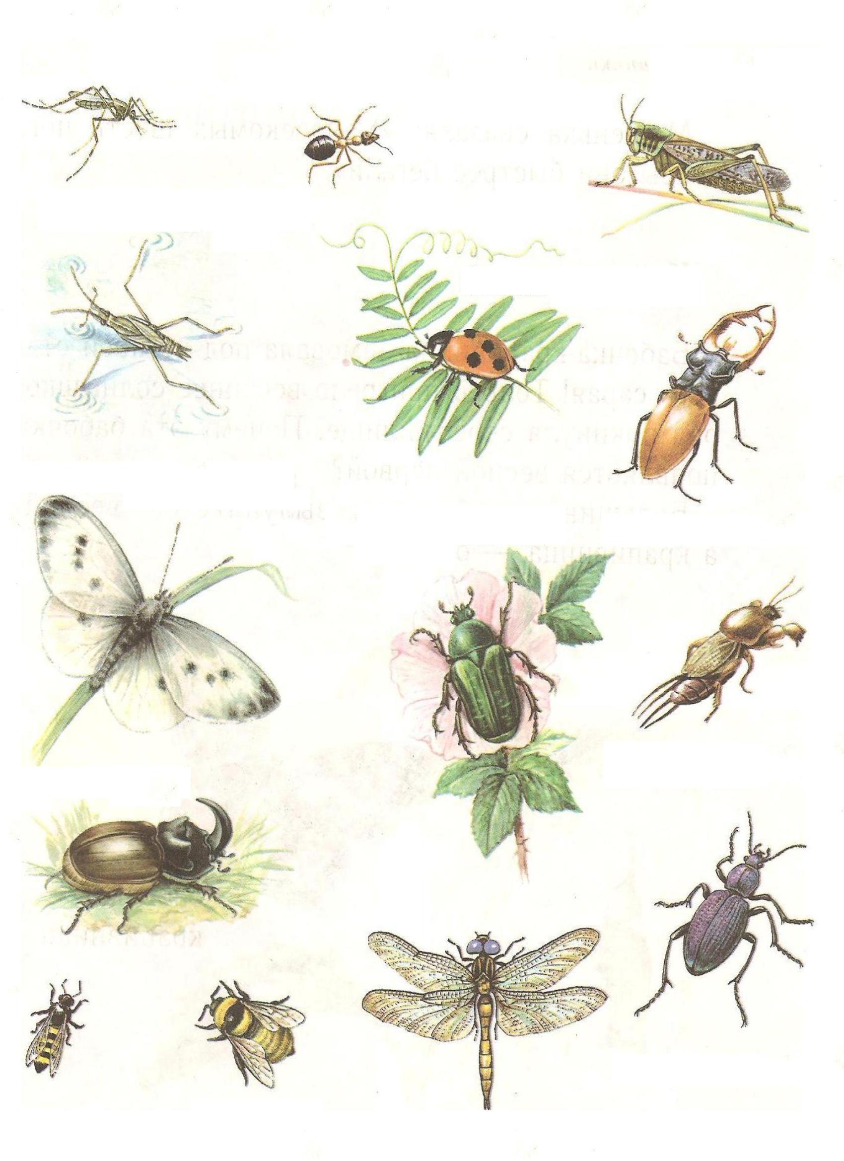 картинка где живут насекомые