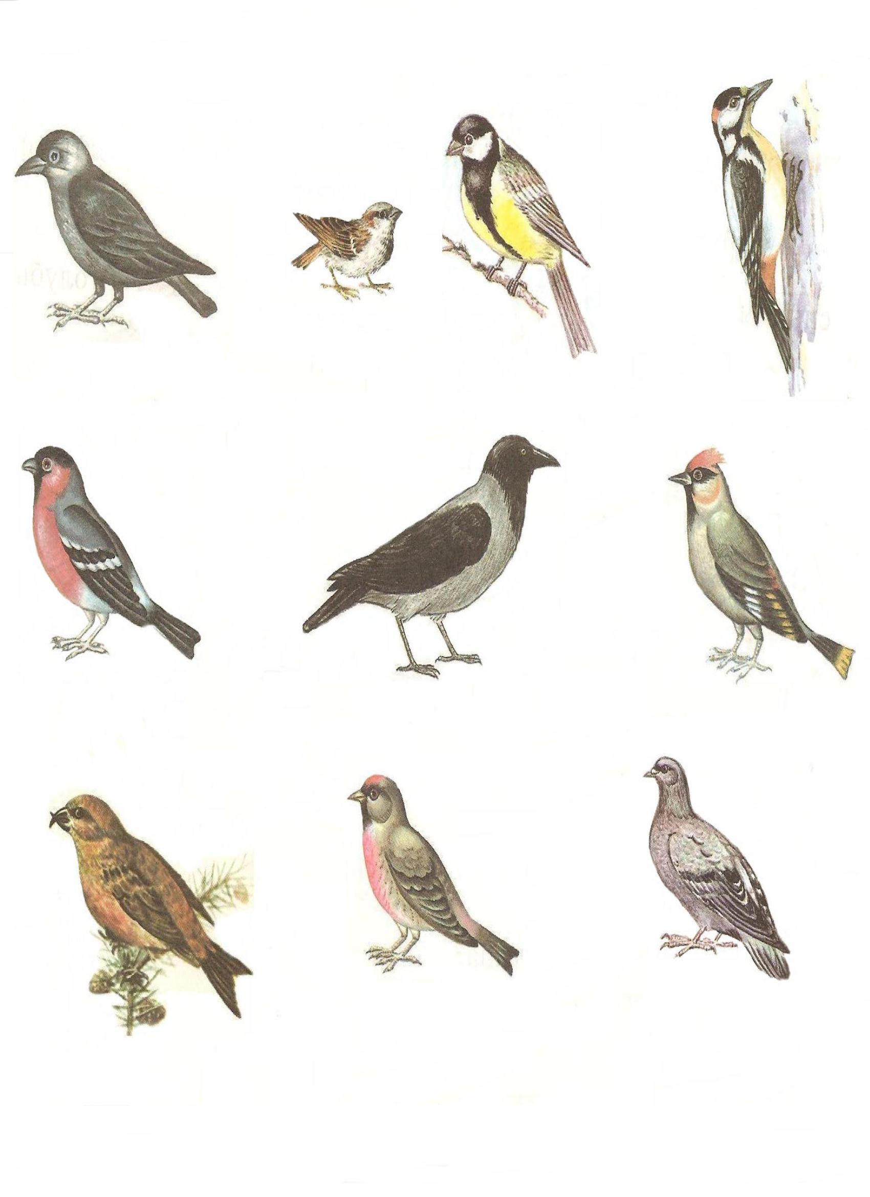 Птицы россии картинки для детей