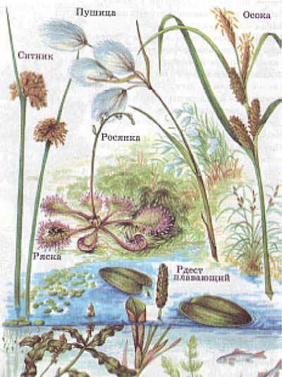 Картинки высоких комнатных растений