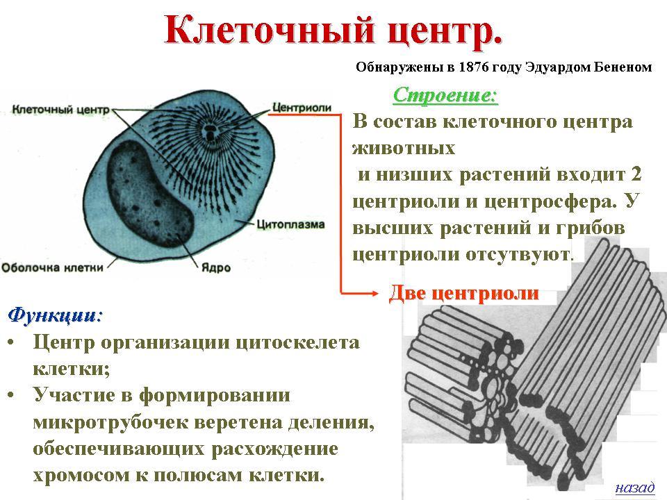 """Применение компьютерных технологий на уроке биологии, тема  """"Строение эукариотической клетки """" ."""