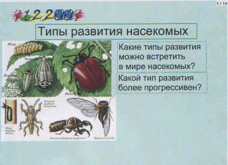 По теме типы развития насекомых