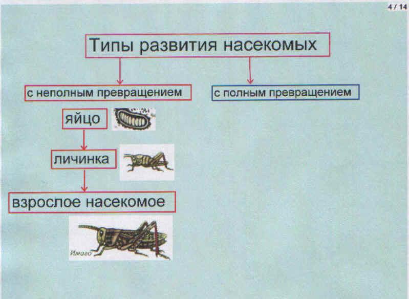 """4 - схема """"Типы развития"""