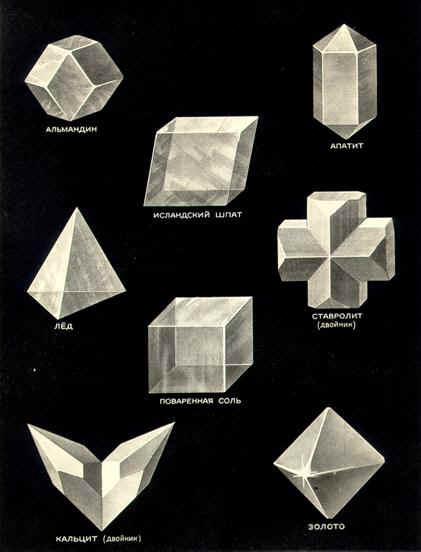 Виды симметрии в природе картинки