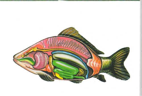 А чем ценна рыба?