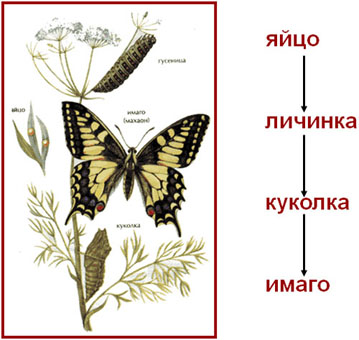 Презентация урока по биологии на тему