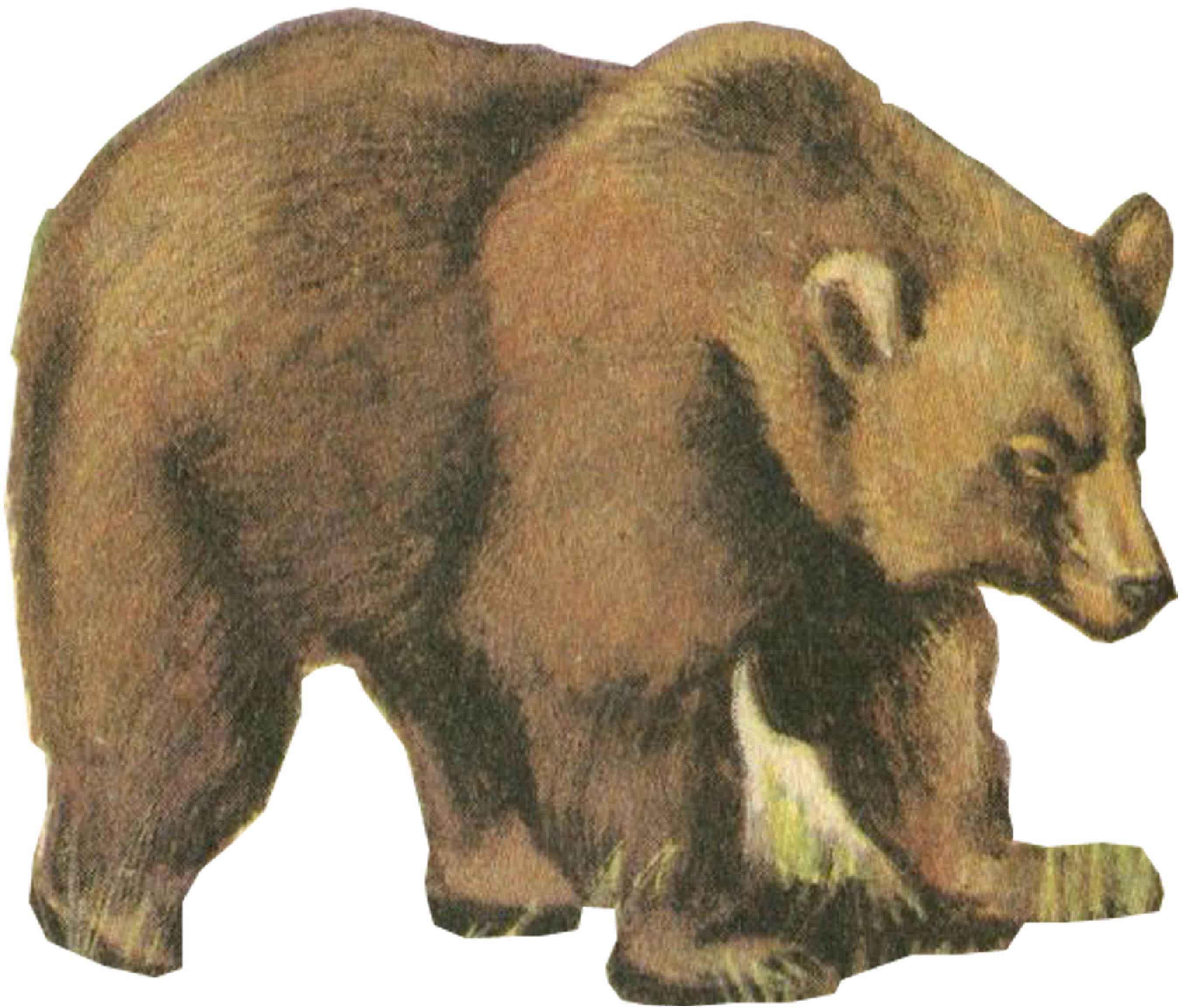 медведь детский рисунок поэтапно
