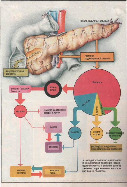 Опухоли поджелудочной железы из островков лангерганса фото