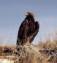 Это фото вы найдете в галереях: лесные птицы ленинградской области.