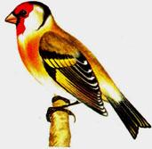 Школе по теме зимующие птицы