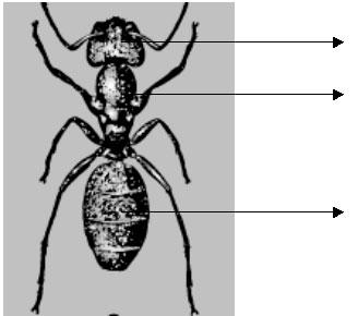 Части тела моллюска 6 хромосома с 3