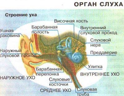 Гигиена органов зрения и слуха реферат 7182