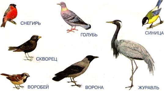 Рассмотрите изображение.  Кто изображён .  Дети: Птицы Воспитатель: Обведите только перелётных птиц. (обводят).