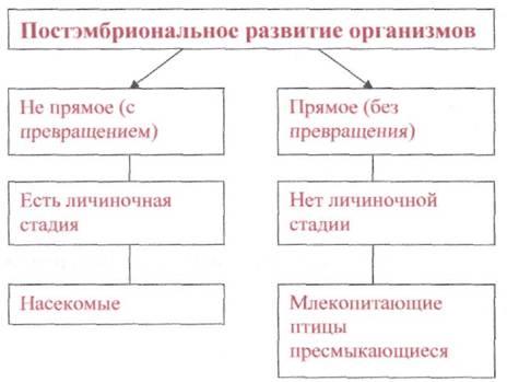 запишите типы развития