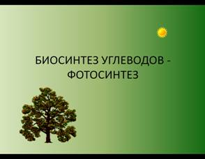 Биосинтез Углеводов Фотосинтез Презентация