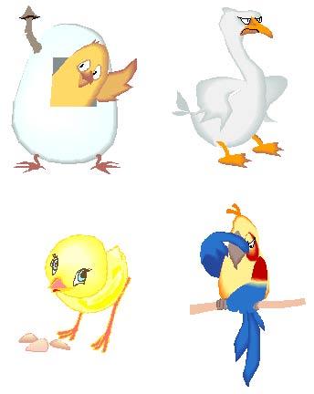 частей тела птиц,