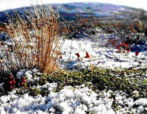 Зима в этой природной зоне