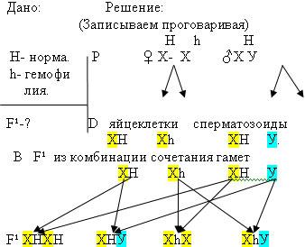Решение задач по гемофилии задачи по физике фотоэффект с решениями