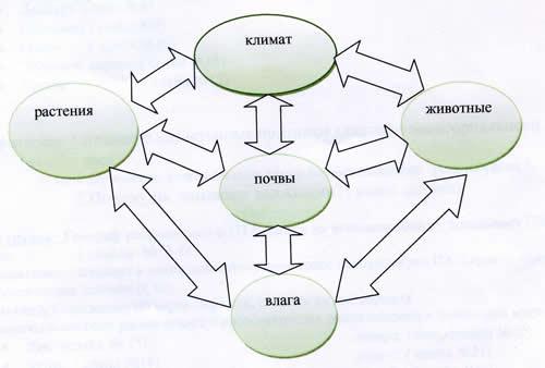 схему природной зоны.