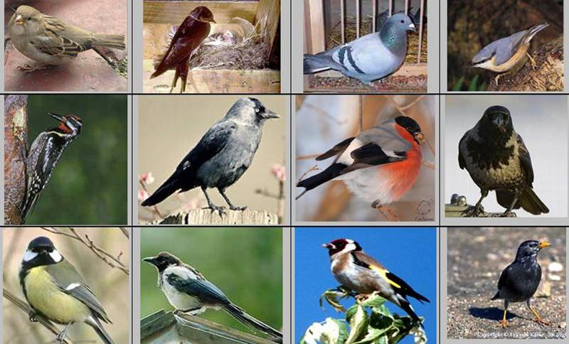 """Конспект урока по теме  """"Зимующие b птицы /b."""