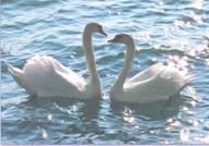 сочинение гуси-лебеди летят