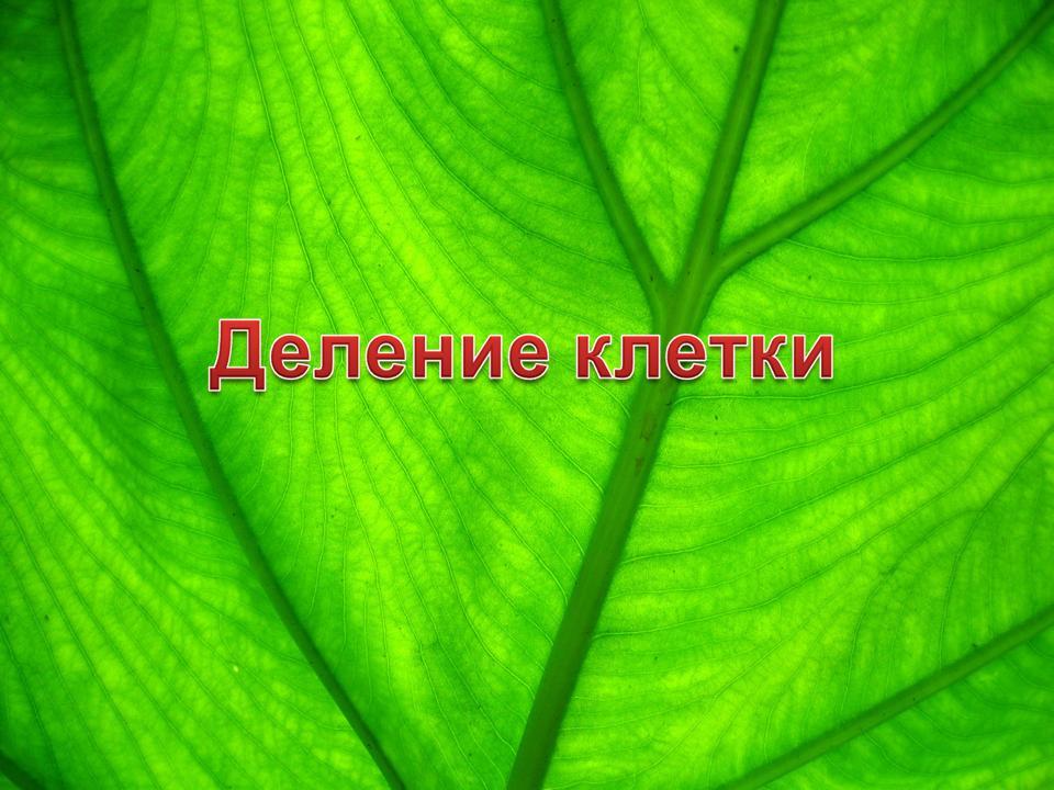 учебник краеведение челябинской области