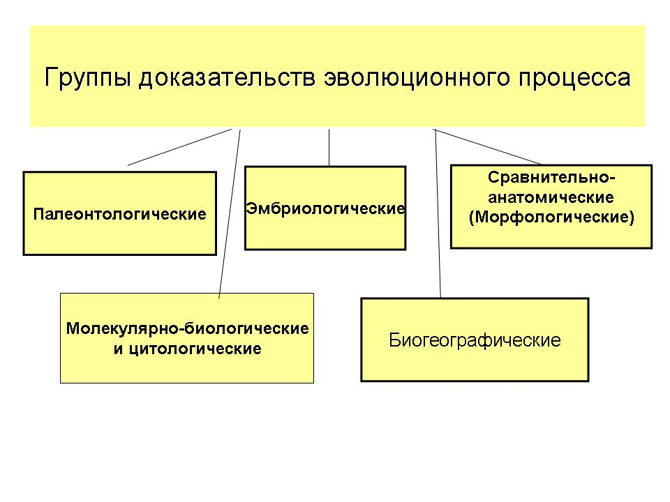 Презентация на тему микра эволюция, её доказательство