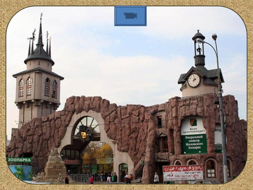 Уроки PR: Московский зоопарк приглашет к ним на ночь - обсужения в Facebook