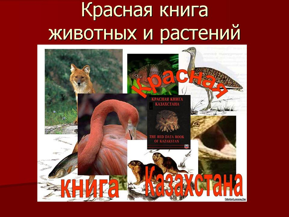 Доклад на тему красная книга по биологии 5359
