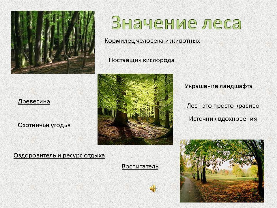 """в 4-м классе """"Леса России"""""""