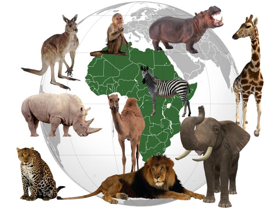 Занятие по теме животные