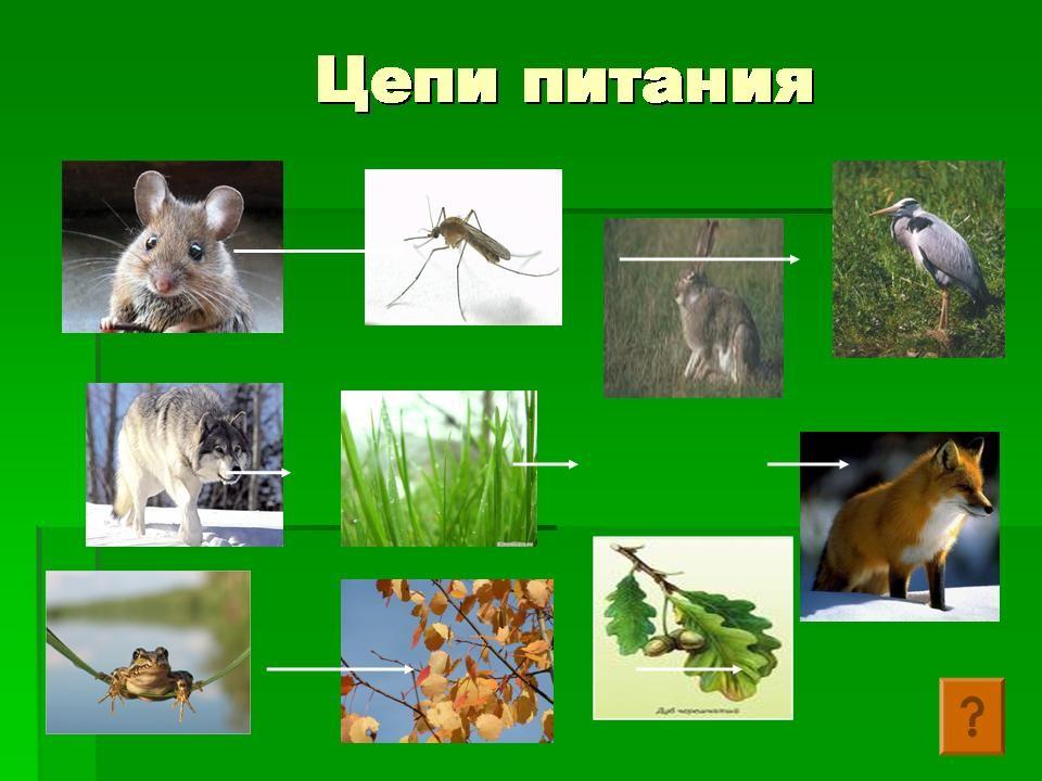 GOLDRUSSIAN.RU | Русский язык для детей и школьников
