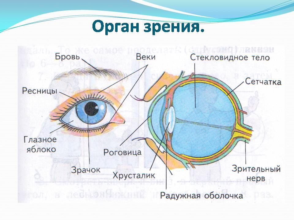 Схема окружающего мира 1 класс фото 622