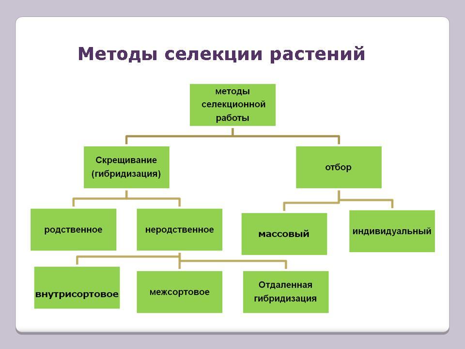 Селекция растений и животных.